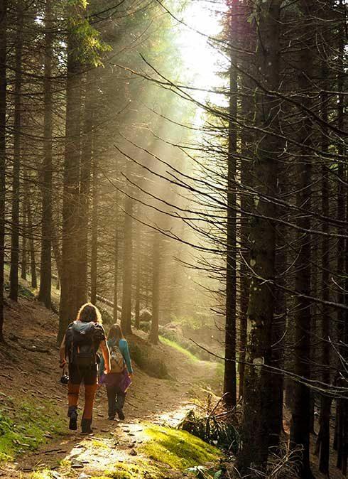 La luce nel bosco